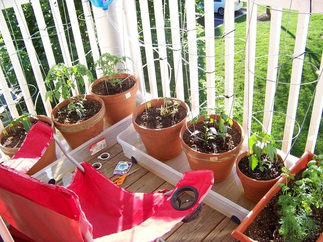 tanaman di balkon